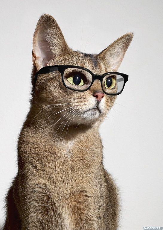 Картинки кошки в очках на аву
