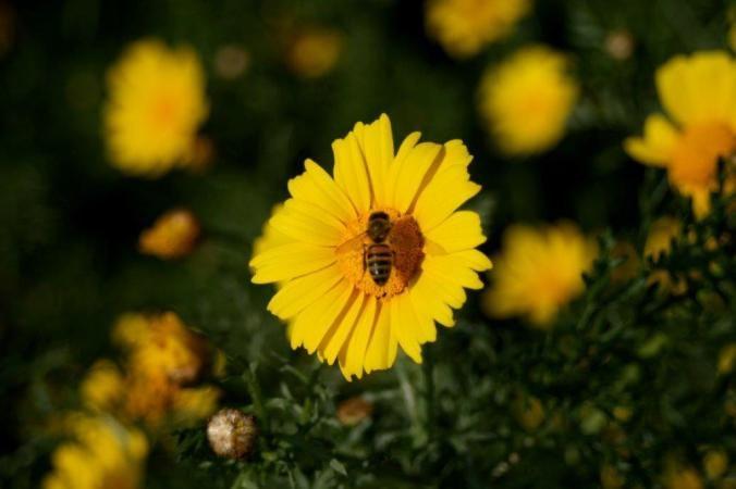 A bee on a flower near #Paphos.