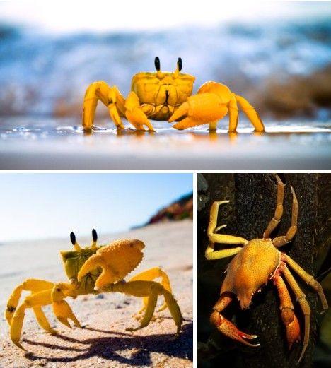 Butter Living: 10 Amazing Yellow Animals