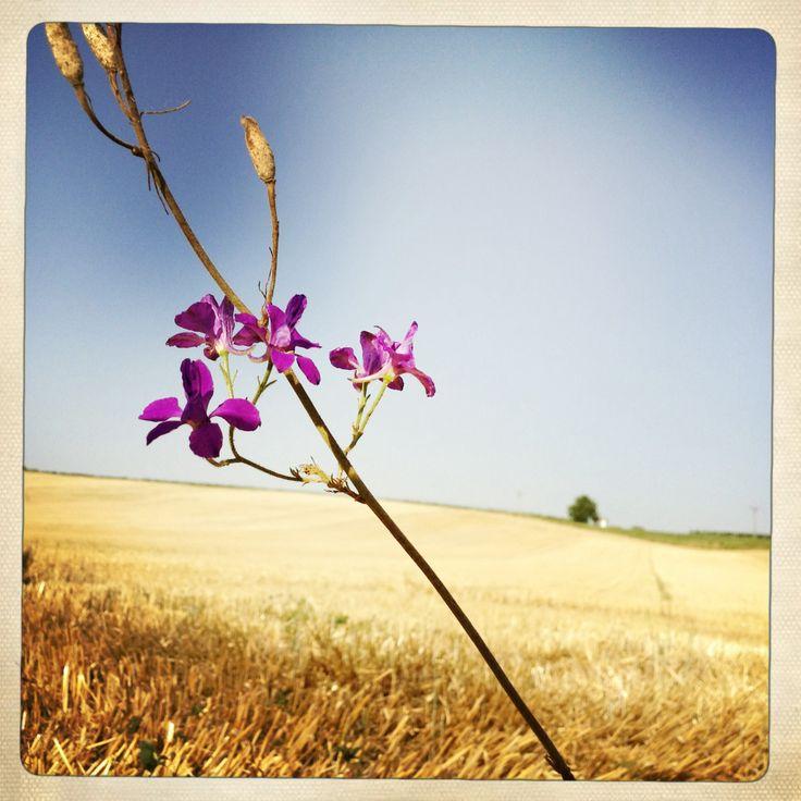 Pozdní léto...