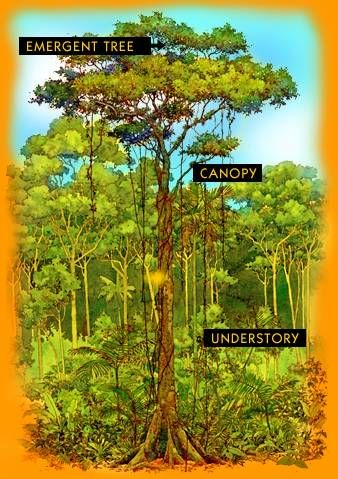 Rainforest Songs Kindergarten Life Cycle Rainforest