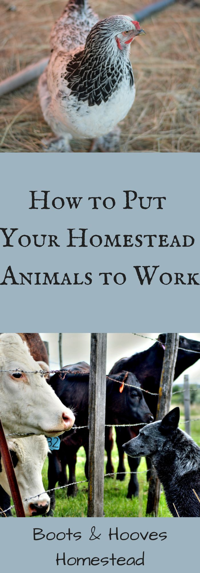 The top ten ways to put your animals to work on the homestead. How many of you are looking for ways to save time on your homestead?