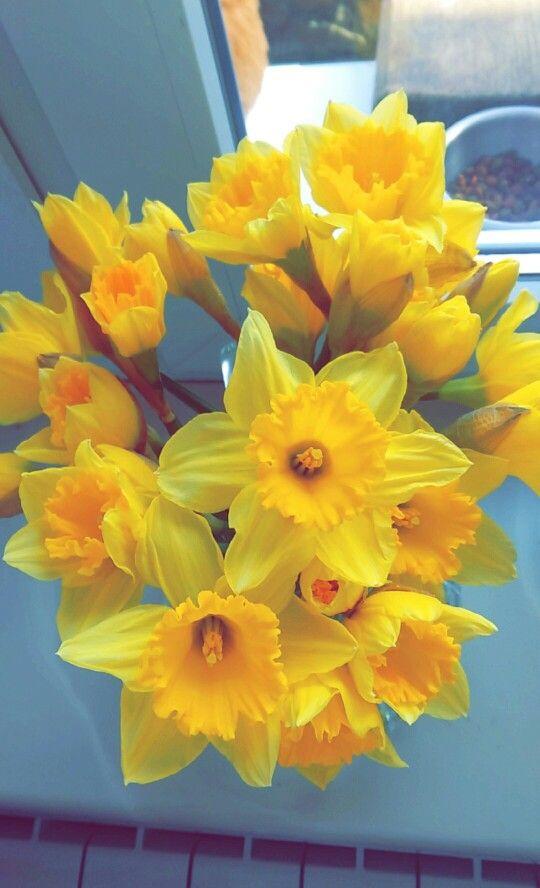 Fragrant Daffodil
