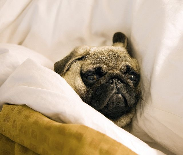 go to sleep, go to sleep, go to sleep little puggie