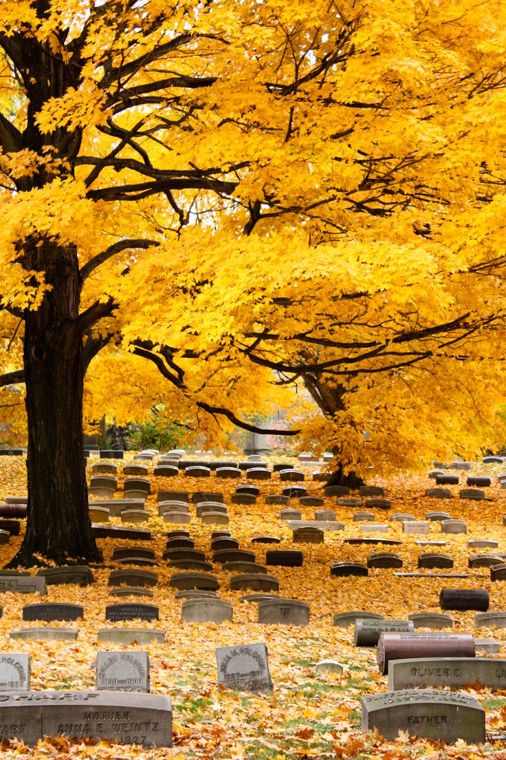 Fall at Lakeview Cemetery
