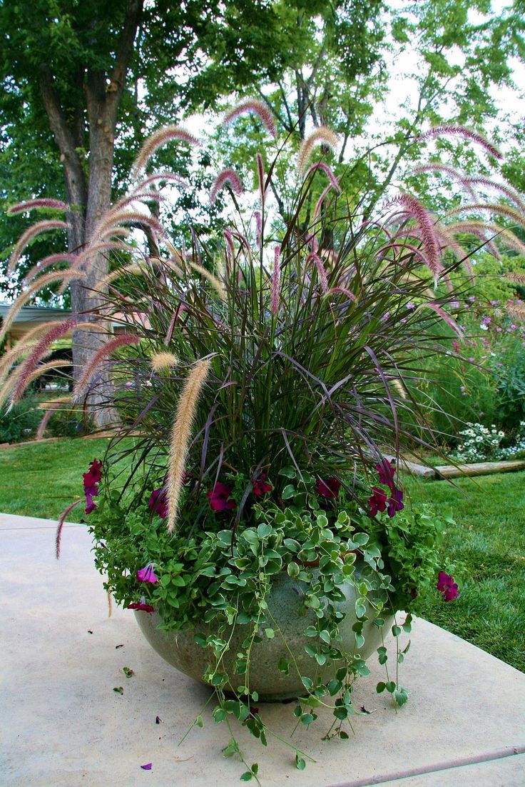 Purple fountain grass, petunias and trailing ivy make for a lovely vertical container garden combo.
