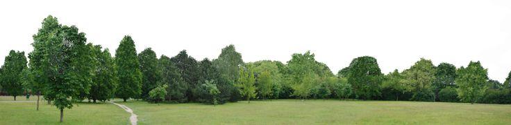 Trees Backgroud png