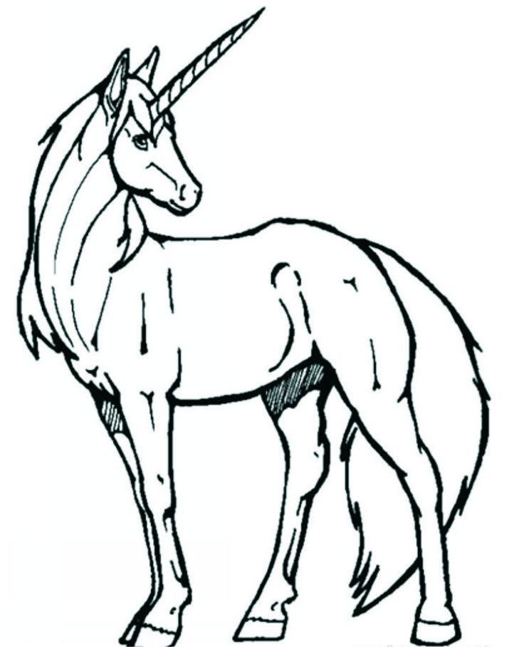 desene cu cai - Căutare Google