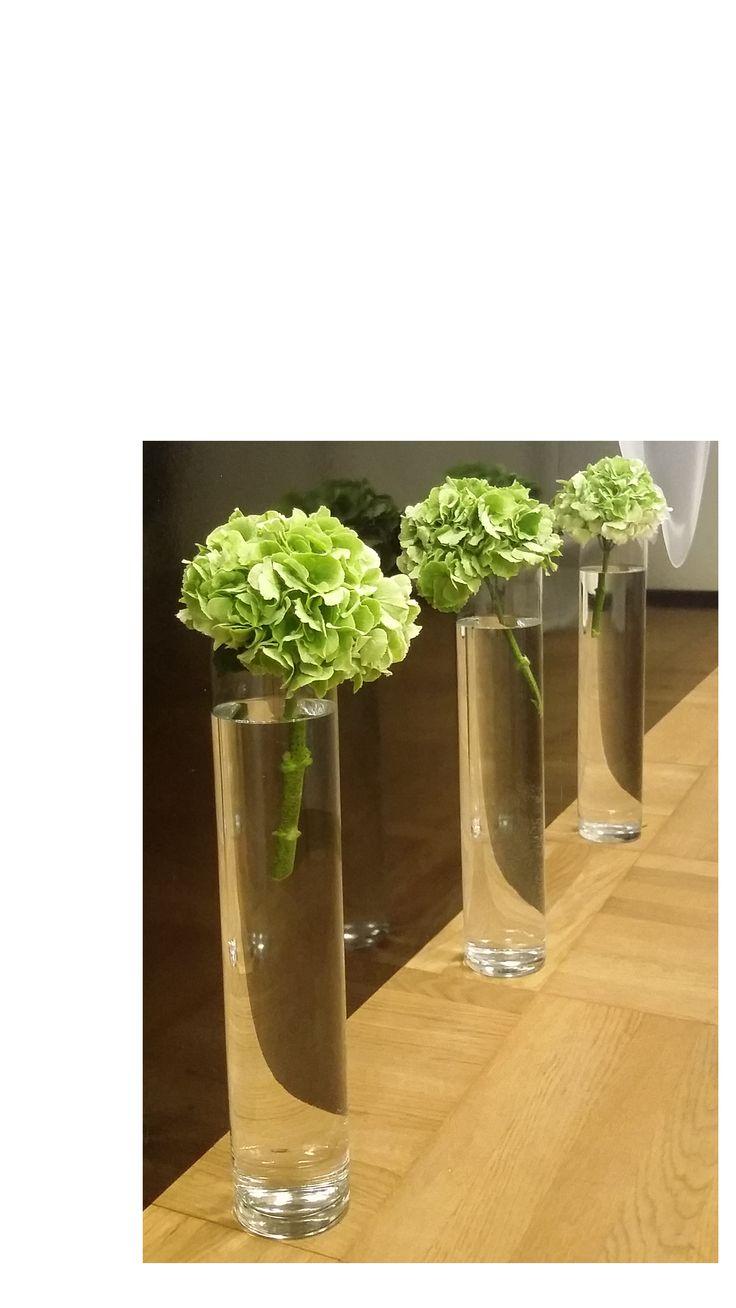 Green Hydrangea Ortensia verde