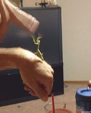 "thenatsdorf: ""Man vs. Mantis slap fight. [full video] "" My money's on the mantis."