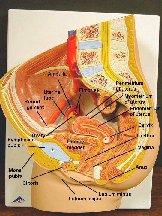 Anatomy of the reproductive system exercise 27 answers
