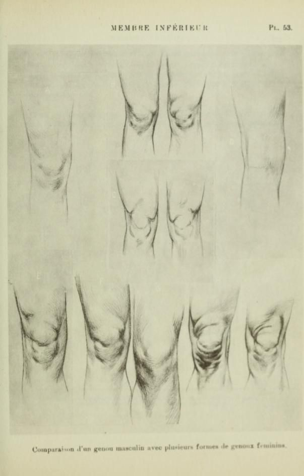 reference of the human knee