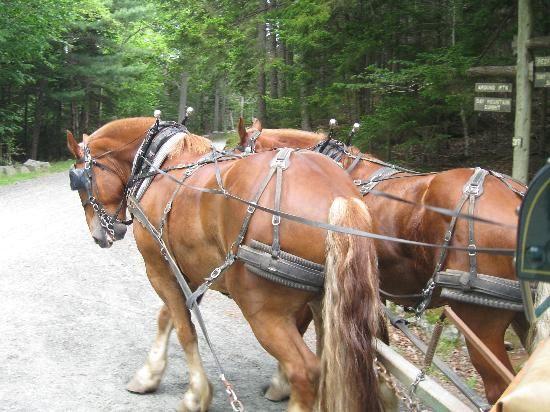 Horses of Acadia   ... de Parc national d'Acadie, DownEast and Acadia Maine - TripAdvisor