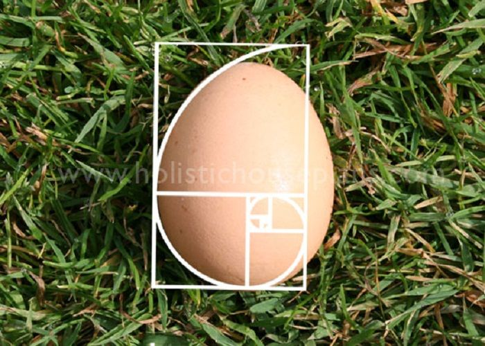 fibonacci in nature | egg