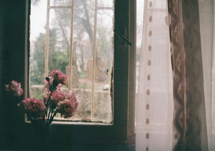 pencere arkası çiçeği