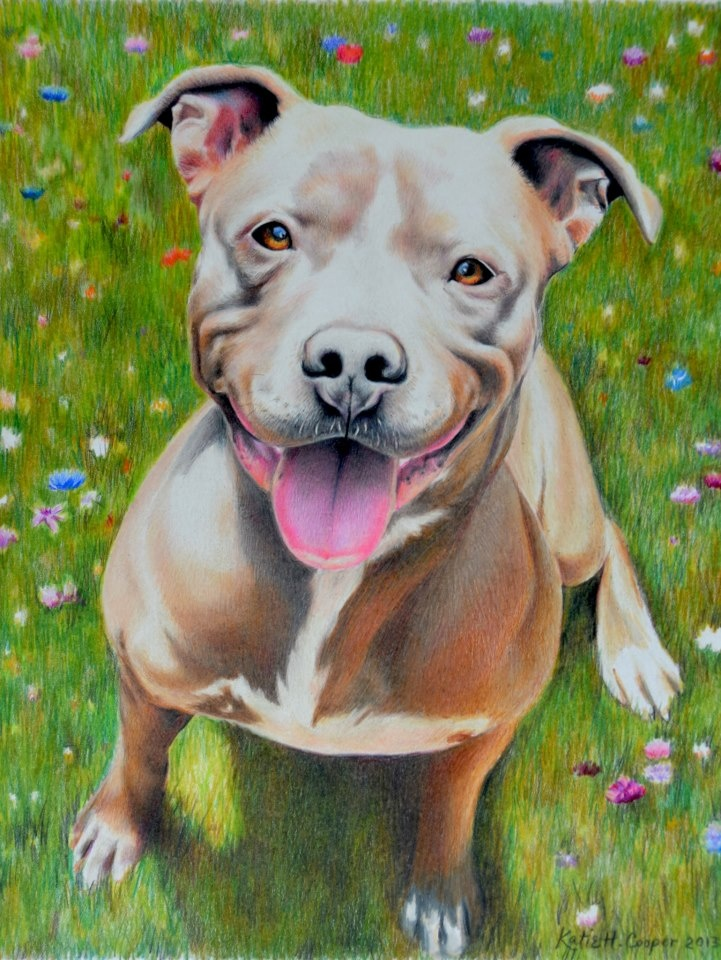 Katie Cooper Artwork from pictures of your favorite pup! Look her up on Facebook