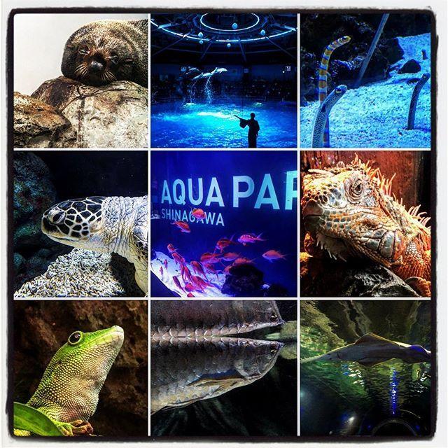 【wataru042】さんのInstagramをピンしています。 《先日の水族館  #品川#プリンスホテル #品川プリンスホテル #水族館#アクアリウム #イルカ #写真 #写真部 #夜#ナイト》