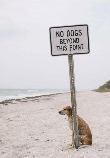 この犬の賢さが可哀そう。 こんな待たせ方をする所に連れ歩くな。  言葉で誤魔化しているだけだ.