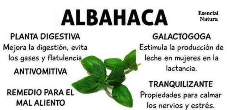 Cómo+utilizar+albahaca+fresca+en+Cuatro+maneras+creativas