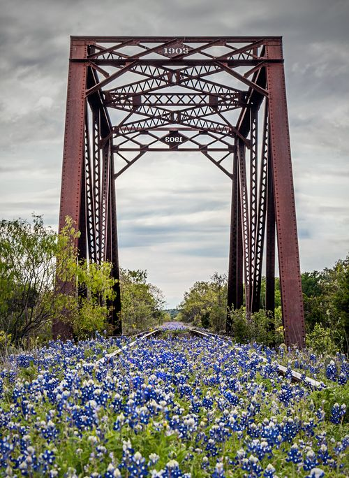 Will Kingsland be bluebonnet central again in 2017? Image credit : Jason Weingart