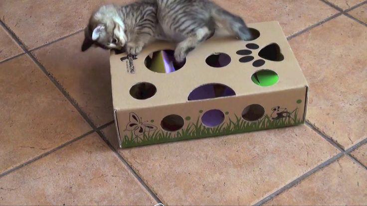 Cat Amazing - Best Cat Toy Ever!