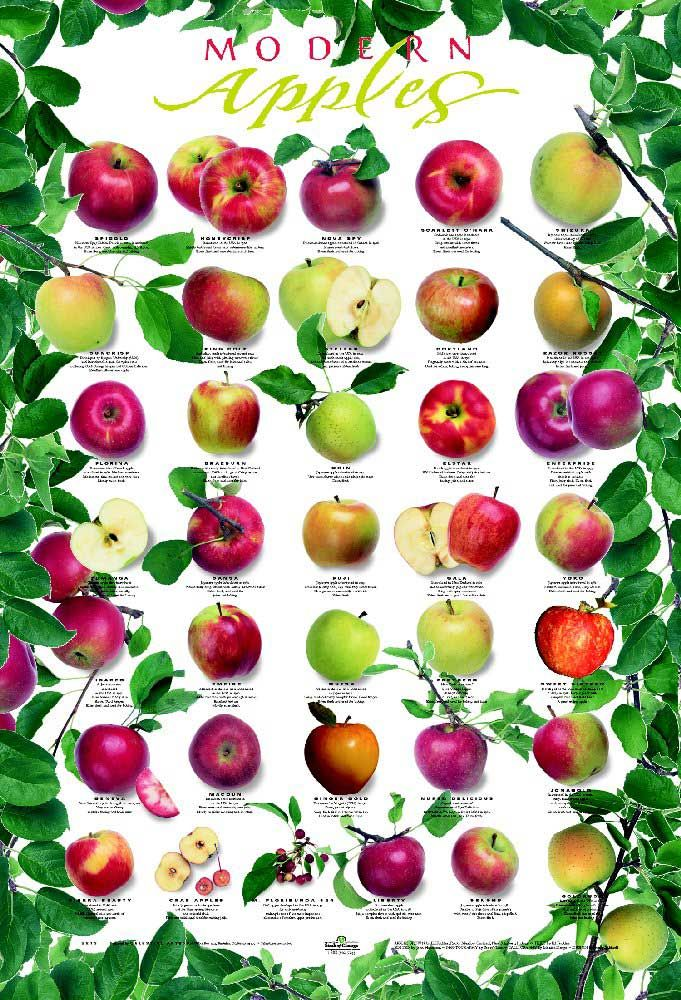 Pin on Free Garden Charts