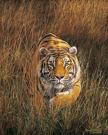 17 Best Images About Famous Wildlife Artists On Pinterest