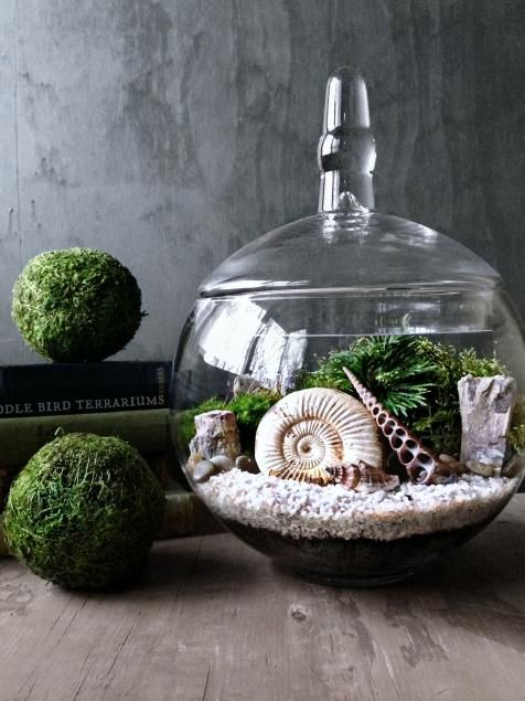 Shells, coral and fossils look phenomenal when mixed with additional elements of nature, such as moss, ferns and other greenery. This gorgeous terrarium by DoodleBirdie puts a genuine ammonite fossil on display.