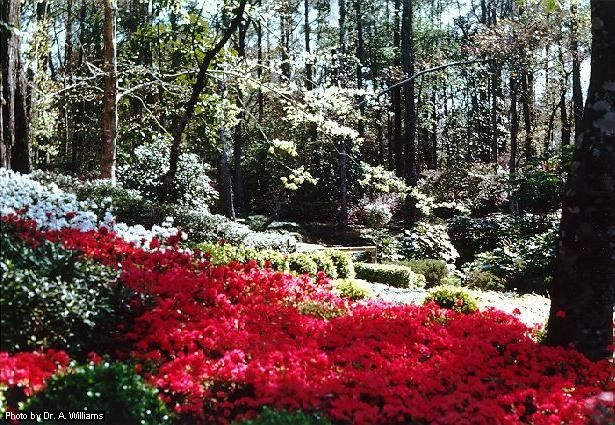 Bellingrath Gardens Sweet Home Alabama Pinterest