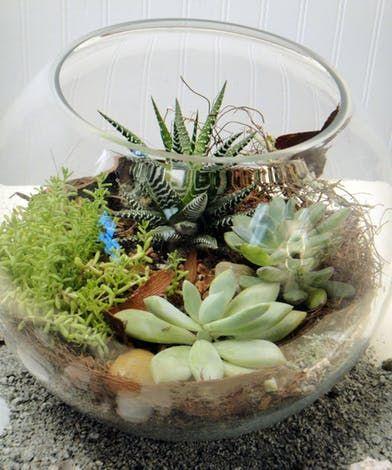 Succulent Bowl Terrarium Succulents Succulent Bowls Succulent