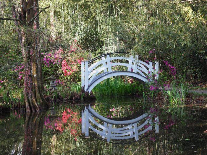 602ad5caae095cc7d66001efe64ceaf8 - Magnolia Plantation And Gardens South Carolina