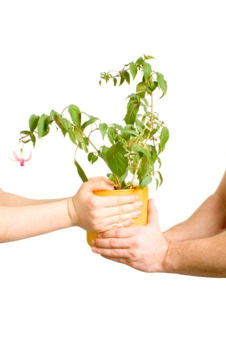 SOS pokojové rostliny: Vyhodit nebo zachránit?