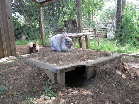 Kaninchen Info - Aussengehegebau - Villa Hasi
