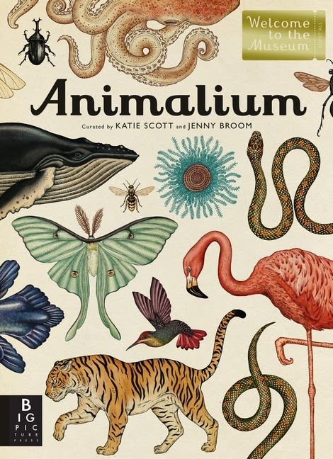 ANIMALIUM, curated by Katie Scott and Jenny Broom. This gorgeous, oversized book is a walk through the galleries of a natural history museum with the classes arranged in evolutionary order to show how the animal kingdom has developed over time.