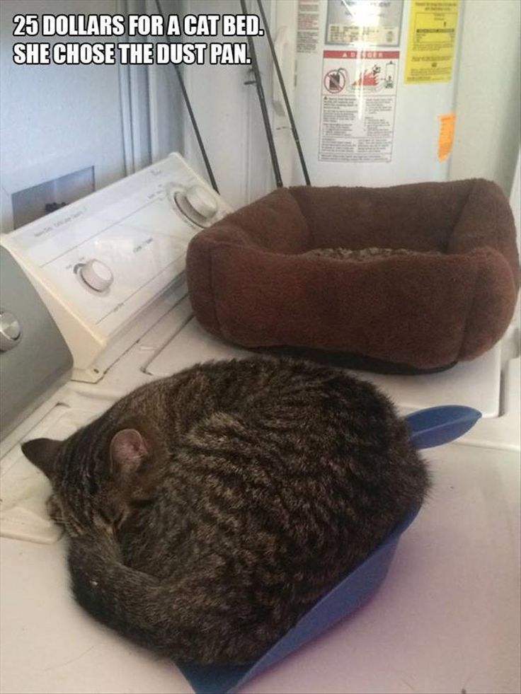 TYPICAL !! CATS CHOOSE THEIR OWN SPECIAL NAPPING SPOTS <3 <3 <3