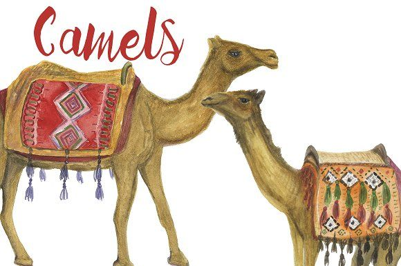 Watercolor Camels by ramika on @creativemarket