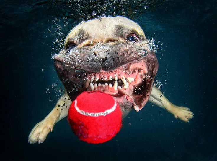 Underwater Dogs: Prepare For Cuteness Overload