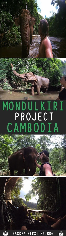 Complete guide to the Mondulkiri Project in Cambodia
