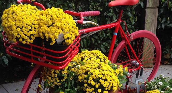 Peter Dowdallsays the chrysanthemum not only brightens up dark days, but has a spiritual aspect too.