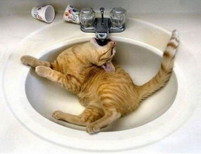 I'm sooooo thirsty!Water, Animal Pics, Dogs Pics, Funny Cat, Pets, Thirsty, Funny Animal Photos, Drinks, Kitty