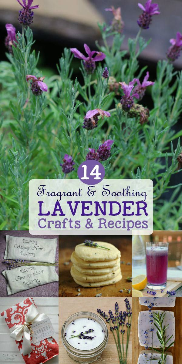 Lavender Crafts and Recipes {Fragrant, Soothing, Delicious}