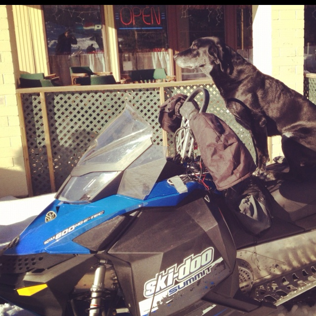 Dog on a sled