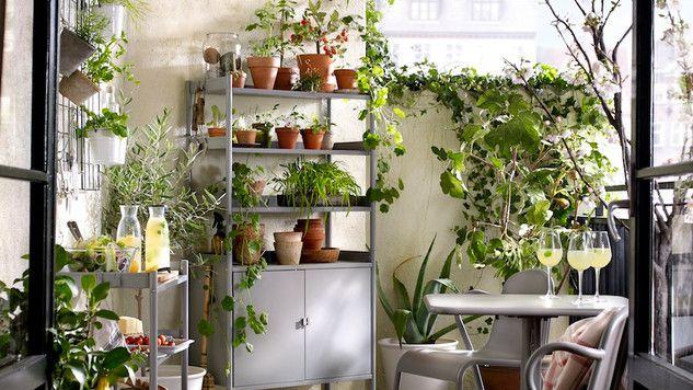 Comment Agrandir Son Balcon Jardin Interieur Plante Verte Et Jardinage Interieur