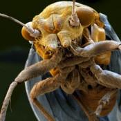 Opeens ogen de huisvlieg en de bedwants als reuzen. Mond en haren worden zichtbaar. Tweehonderd soorten zijn er in de app opgenomen, vastgelegd in meer dan 550 beelden. Elke opname is voorzien van een kort bijschrift, in het Engels, met weetjes als het favoriete voedsel van elk beestje en de plek waar hij zich het liefst nestelt. Er is te zoeken op naam, op soort (insect, geleedpotige) en of het diertje kan vliegen.
