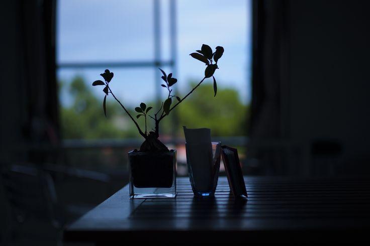 Tea time by Tetsu Nakamura - Photo 112567853 - 500px