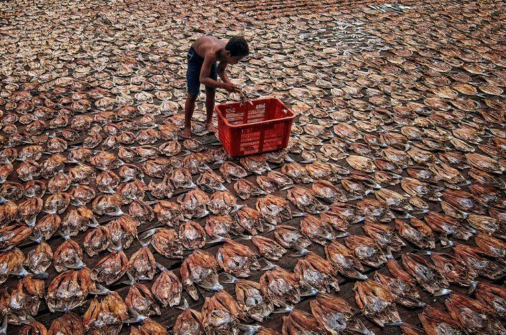 Penjemuran ikan asin