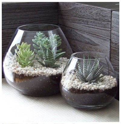 Indoor plants.. Love the containers and white rocks.