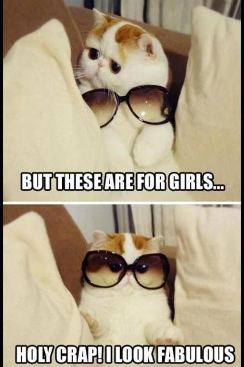 Too cute.: Funny Things, Funny Pics, Funny Cats, So Cute, Cute Cat, Funny Stuff, Funny Animal, So Funny, Sunglasses