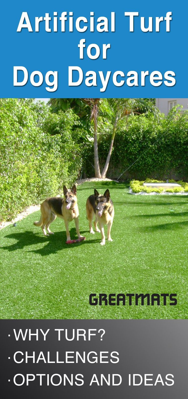 Are You Looking For A Way To Revitalize Your Dog Daycare Do You