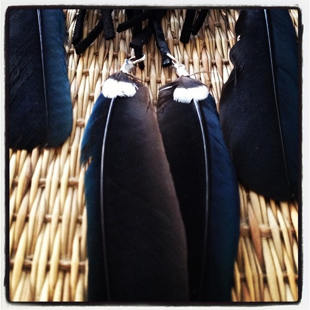 Tui feather necklace